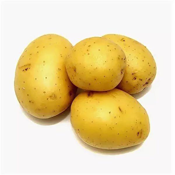 Десятка лучших сортов картофеля: посадка и уход