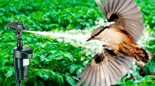 Отпугиватели птиц для элеваторов элеватор производственная практика